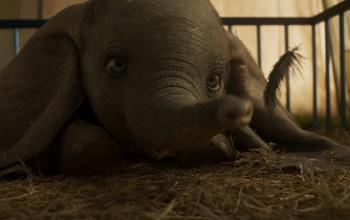 Dumbo di Tim Burton arriva al cinema