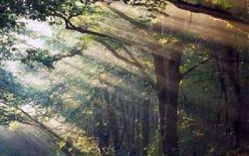 Itinerari magici: il mistero della foresta di Paimpont