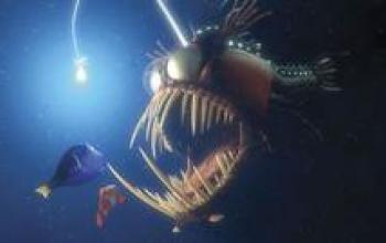 Il pesciolino Nemo lo hanno trovato in molti
