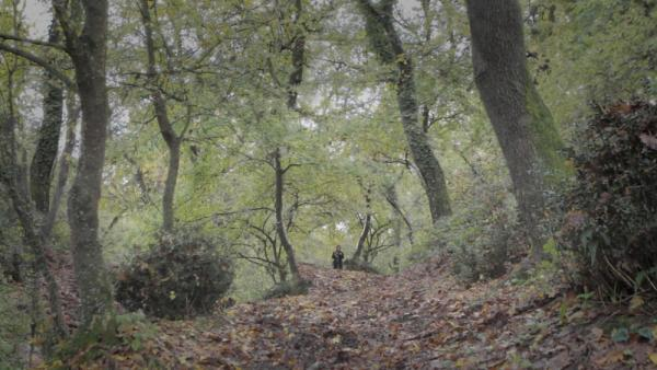Fantasticherie di un passeggiatore solitario