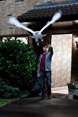 Harry Potter e Hedwige