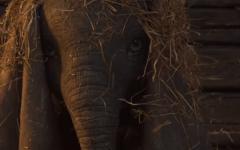 Il primo trailer del remake live action di Dumbo firmato da Tim Burton