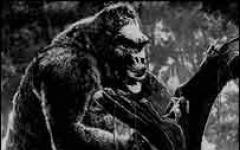 Il gorilla non si tocca