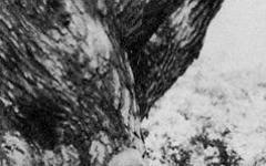 Come venne accolto il Signore degli Anelli nel 1954?