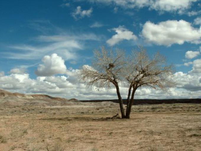 Desert Landscape, Uintah County, Utah (Fonte http://www.celnav.de/vacation/gallery3.htm)