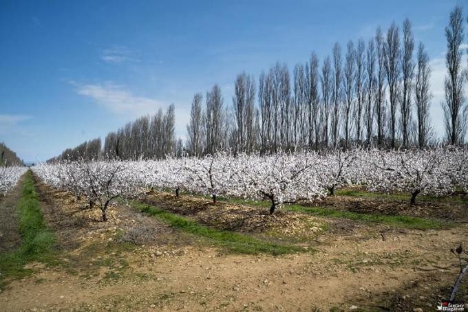 Cherry blossom view, Van Gogh & Japan � EXHIBITION ON SCREEN (David Bickerstaff)
