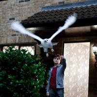 Tris di Total e nuovi poster ufficiali per Harry Potter e i doni della morte